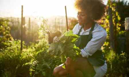 young millennial black woman pulling beets from garden