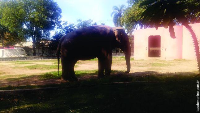 zoologico de sorocaba