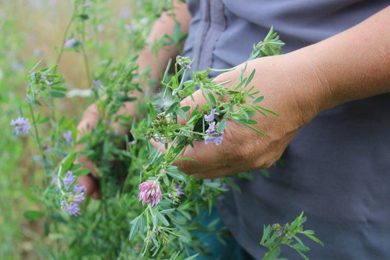 Isabella Hirsch steht auf dem Blühacker im mittelfränkischen Feuchtwangen und hält Blumen in der Hand.