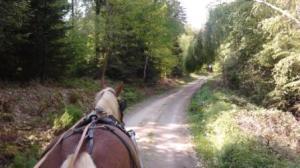Familienurlaub, Zeltnerhof, Kutsche fahren