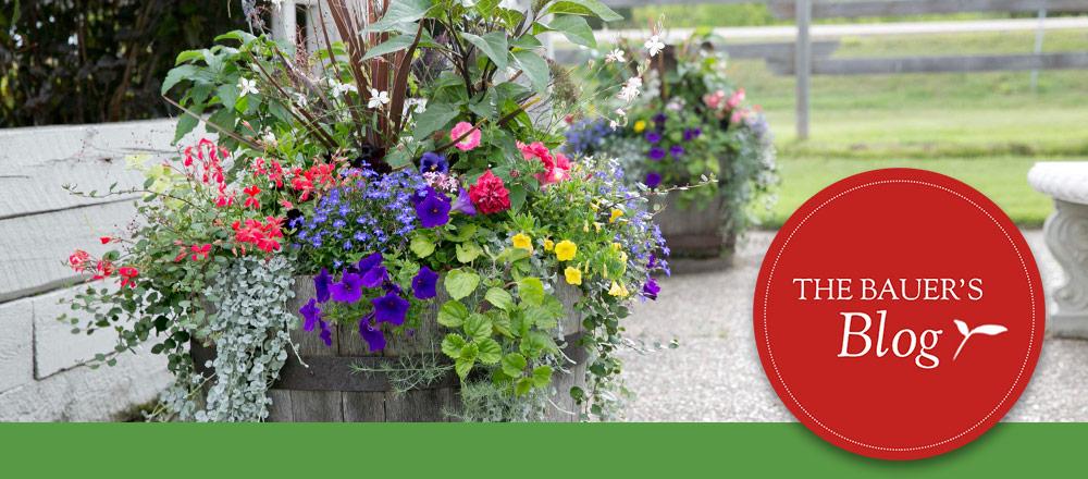 Container Garden University