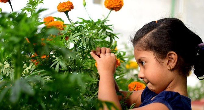 young girl looking at marigolds