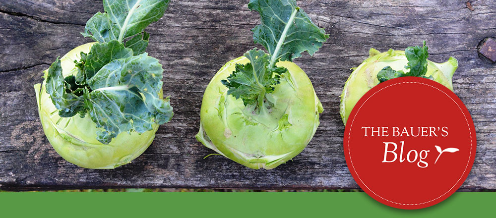 3 kohlrabi plants lined up on wooden bench