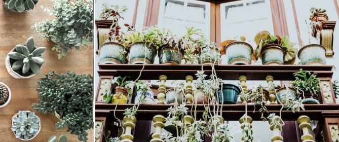 top view of succulent plants (left), multiple plants on shelf