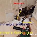 Schimmelpilz entfernen - Schimmel in Wohnungen