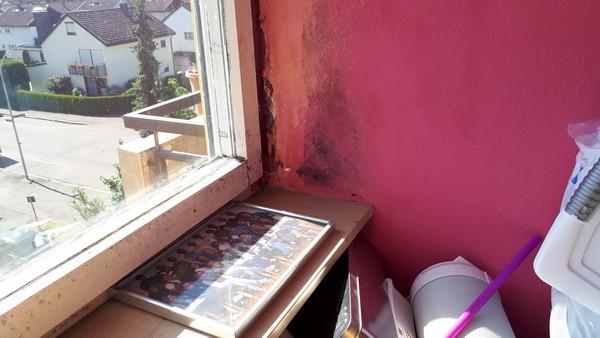 Doppelkastenfenster, Beratung Fenstergutachter Kinderzimmer Fensterleibung verschimmelt Schimmelgutachter Mieter lüftet nicht Schimmelpilz, Fenstersanierung Fenstertausch
