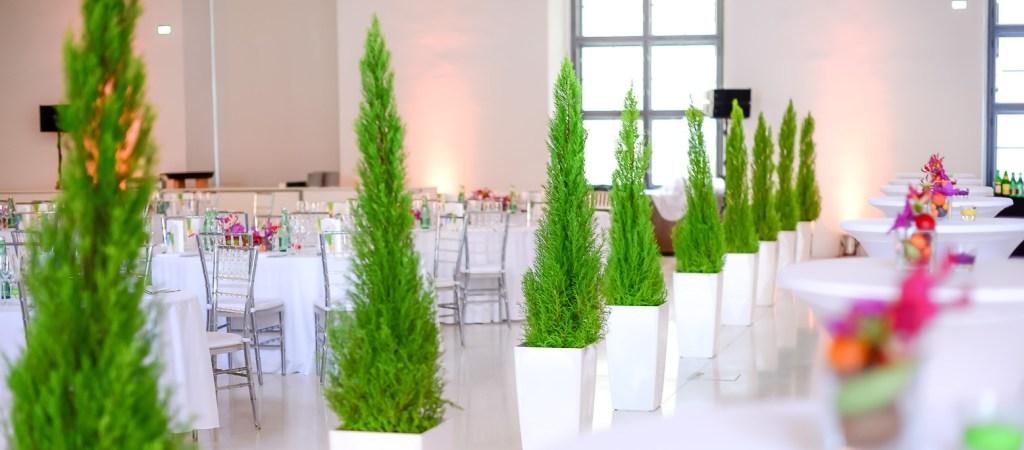 MIetpfalnzen, Eventgestaltung, Blumengestaltung, Blumendekoration, Pflanzen