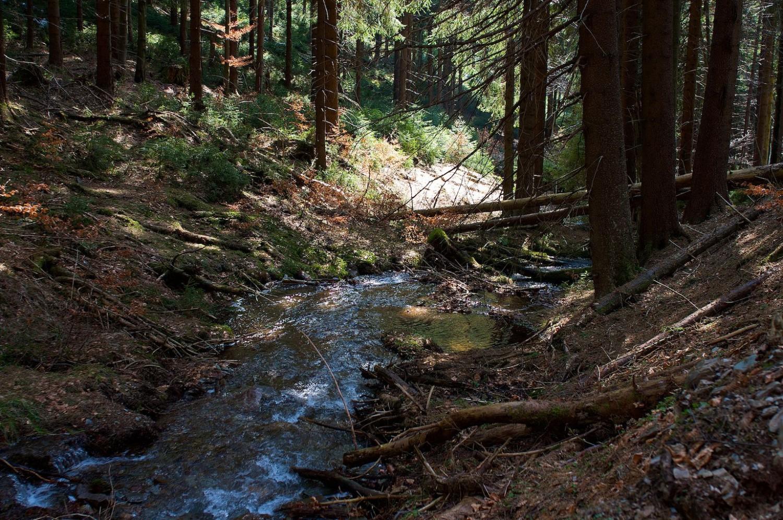 Ein Tag im Wald, 18.09.2016