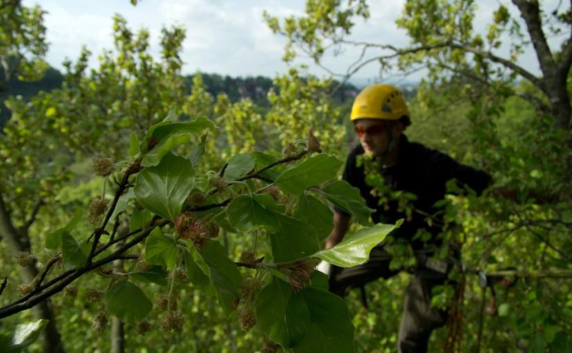 Baumpflegeteam Busemann