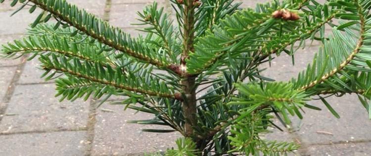 Weihnachtsbaum-05