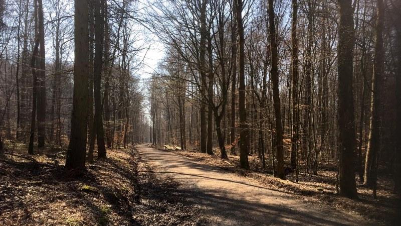 Wandertipps 2 – Gemütliche Runde um den Baunsberg