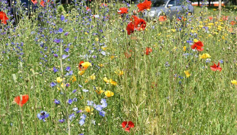 Blühstreifen, Baunatal, Artenschutz, Naturschutz