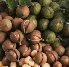 https://i2.wp.com/bauplemuseum.com/images/macadamia-nuts.jpg?quality=80&strip=all