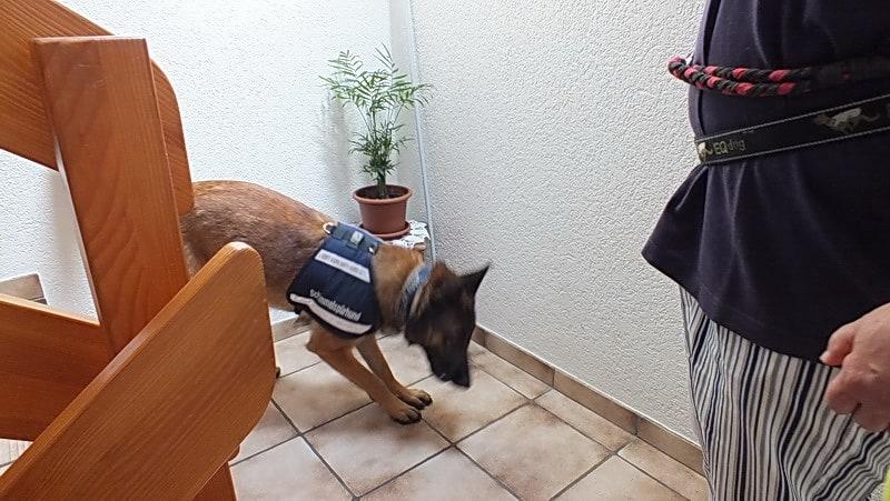 Schimmelhund Kosten moderat - Schimmelspürhund