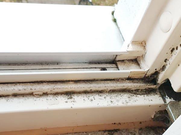muffiger Geruch, angelaufene Fensterscheiben, Wohnungen, Schimmelpilz im Fensterrahmen, muffiger Geruch, angelaufene Fensterscheiben, Wohnungen