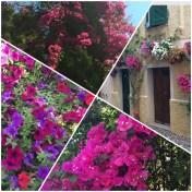 Blomsterprakt-i-Alghero