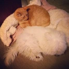 Sover tillsammans på soffan