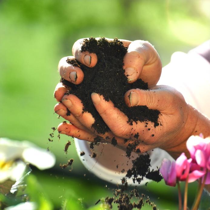 Dunkle Blumenerde mit vielen Mikroorganismen