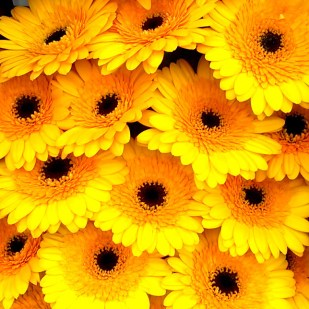 Florist Experience 03