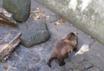 krumlov bears