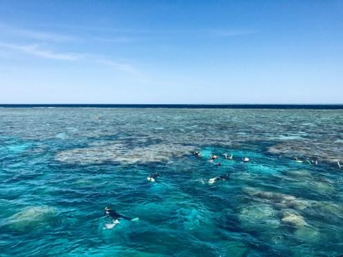 Great Barrier Reef Port Douglas Australia Snorkeling
