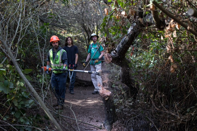 Volunteers observe as a parks and recreation employee cuts away overgrowth using a telescoping saw
