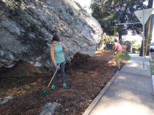 A masked volunteer uses a rake to spread mulch around. Another volunteer also spreads mulch in the background