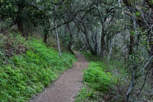 Evening Pulgas Trail