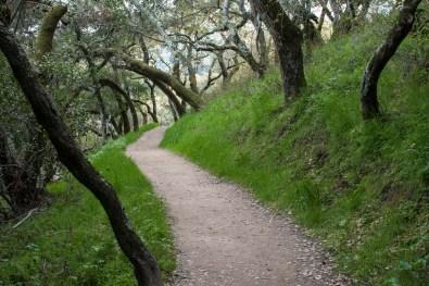 Pulgas Trail Green Grass