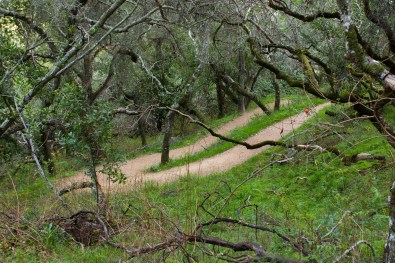 Pulgas Trail Switchback