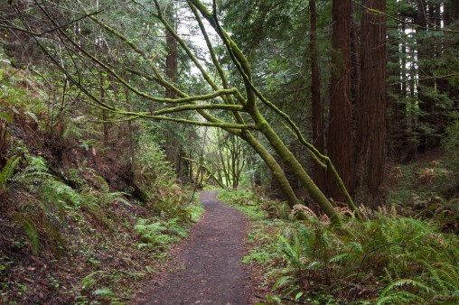 Purisima_Creek_Redwoods14