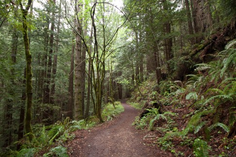 Purisima_Creek_Redwoods17