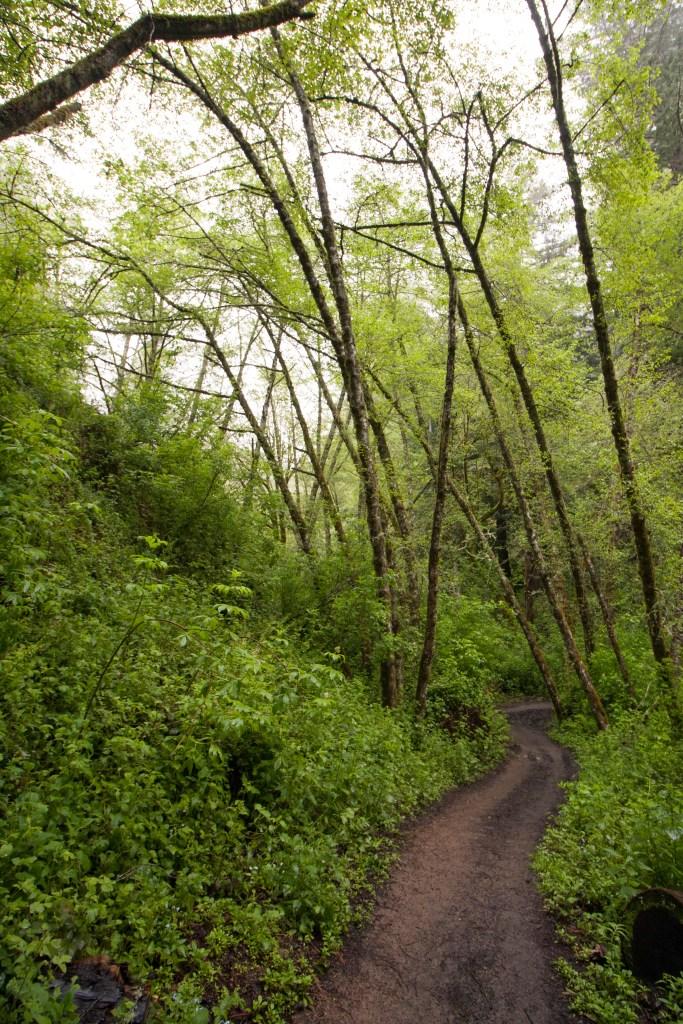 Purisima_Creek_Redwoods18