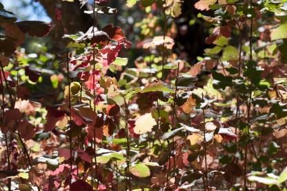 field of glowing leaves