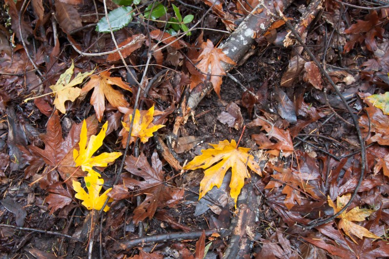 161124-wunderlich-four-yellow-leaves