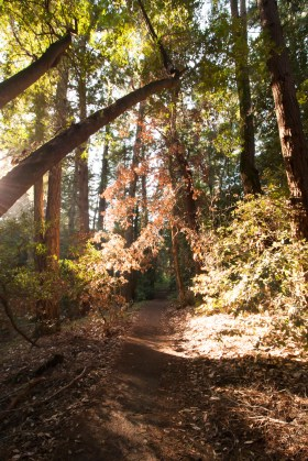 161124-wunderlich-glowing-leaves