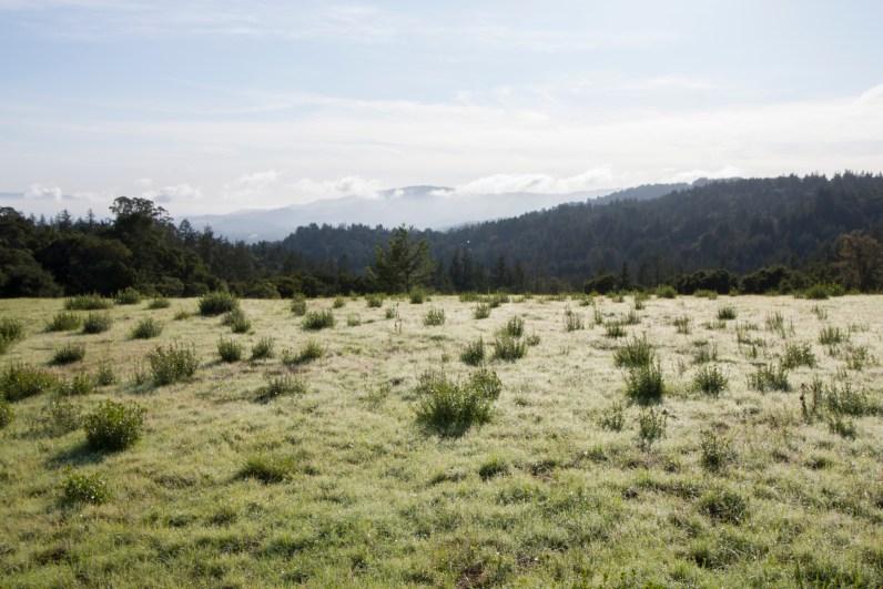 161124-wunderlich-meadow-dew