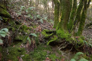 161124-wunderlich-moss-roots