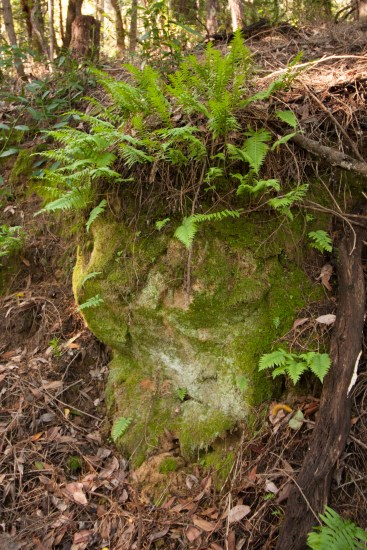 161124-wunderlich-mossy-rock-with-ferns-on-top
