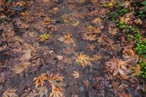 161124-wunderlich-wet-trail