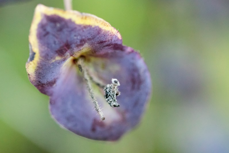 wunderlich-tiny-things-04