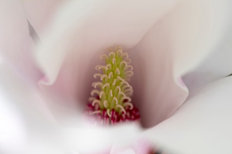 031317white magnolia inside