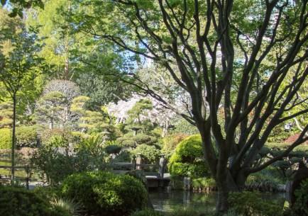 032817japanese-tea-garden