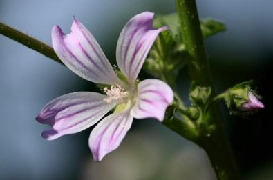 041917-wildflowers san mateo bridge1