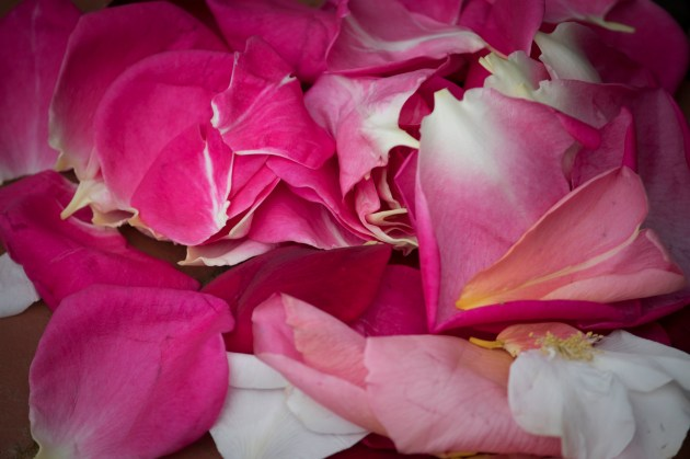 042517pile of petals