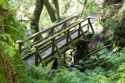 042917stinson bridge and greenery