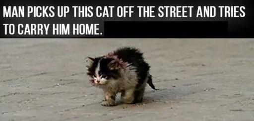 ugly cat story heartbreaking