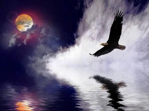 Soar Eagle Soar