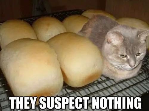 cute cat memes clean