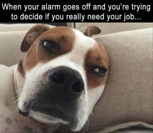 funny monday morning memes